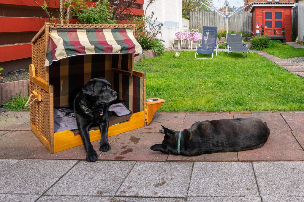 Zwei Hunde und Hundestrandkorb