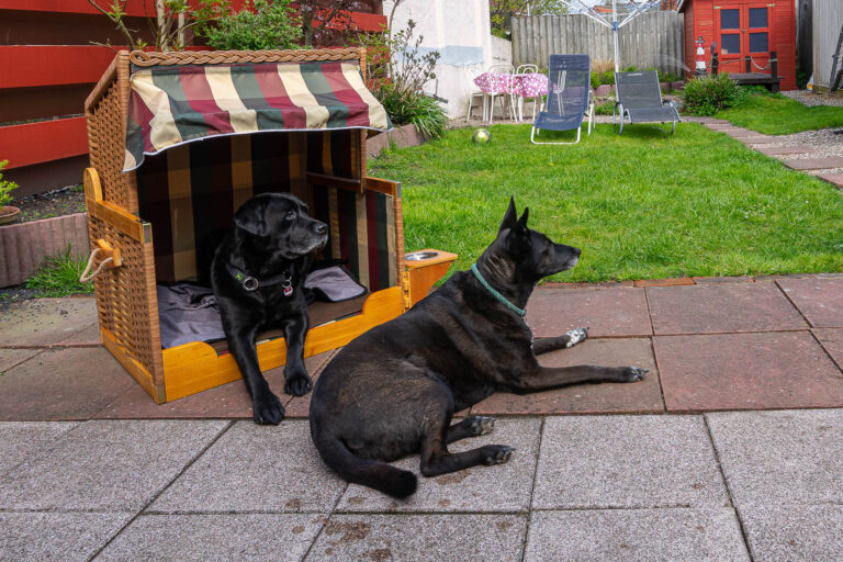 Ferienhaus mit Hund Nordsee Hundestrandkorb Fella un Ole
